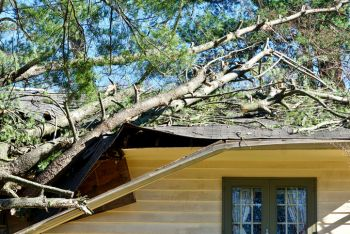Jacksonville Florida Fallen Tree Damage Restoration by DRT Restoration, LLC